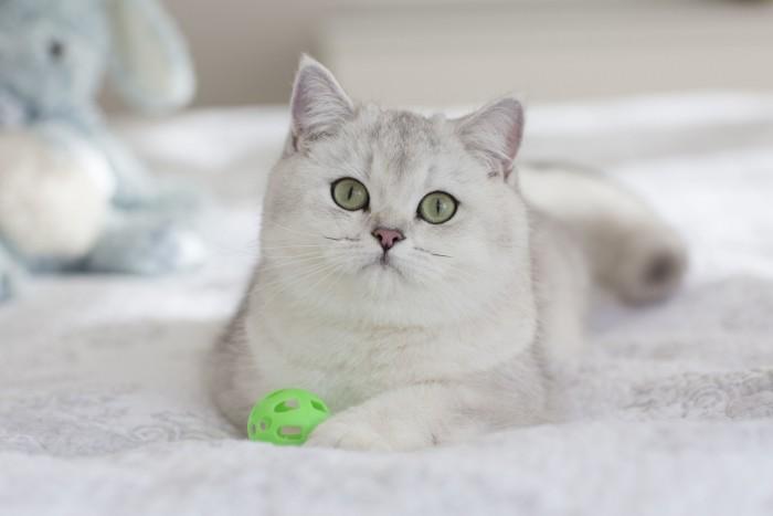 site za mačke dame broj web stranice za zoosk