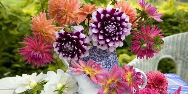 Cveće Koje će Vašem Domu Dodati Letnji Duh Mogu Ja To Sama